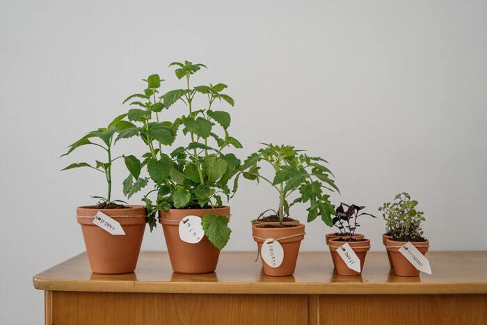 ハーブでナチュラルに虫除けしましょ。おすすめハーブ8種&育て方のコツ