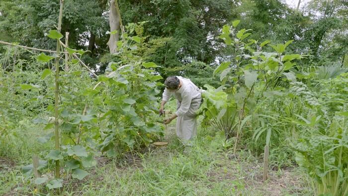 庭ではきゅうりやトマトなどの野菜や、バジルなどのハーブを栽培されていて、季節ごとに採れる植物をアート感覚でお部屋に彩るのだそう。