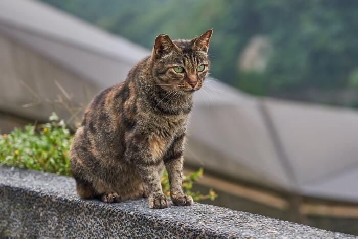 九份の隣にある「猴硐(ホウトン)」という町では、たくさんの猫がいる「猫村」として近年猫好きに大人気のスポットです。もともと大きな町ではないのですが、そこに住む猫はなんと100匹以上いるとのこと!