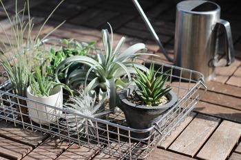 ステンレスのワイヤーバスケットを、植物入れに利用。室内にある植物をベランダで日光浴させたいときにも、カゴに入れたまま水やりができて便利です。
