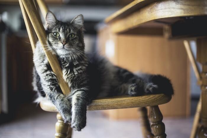 猫さんといつもいっしょ。暮らしを彩る「猫グッズ」特集