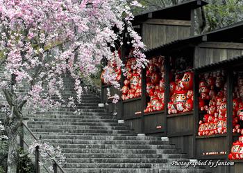 勝運の寺として知られる勝尾寺は、院内にたくさんのだるまが並ぶ光景と、箕面山の自然が楽しめるスポット。季節によって桜や紅葉が見られ、参拝しながら四季を感じることができます。