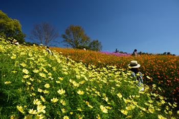 1970年に開催された、日本万国博覧会を記念して作られた文化公園です。太陽の塔の周辺には色とりどりの草花や樹木が植えられ、四季折々の景色を楽しめるのが魅力。博物館やスポーツ施設などもあり、その時の気分や目的に応じてさまざまな楽しみ方ができます。