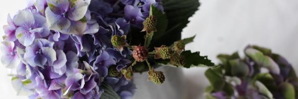 【連載】『霽れと褻』代表・田中さんに教わる「花ごよみ」vol.2-アジサイ
